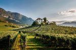 Vignoble Tyrol du Sud